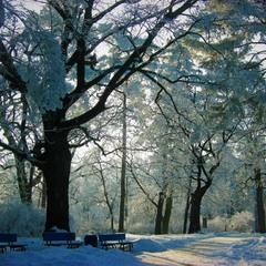 Утро в парке. Наполнен воздух шепотом зимы.