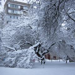 Снег навеял городу сон белоснежный!