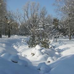 Зима белявкой рождена!