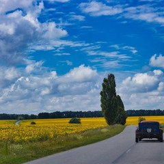 Дорога між соняшниковими полями