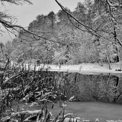 Чорно-біла зима