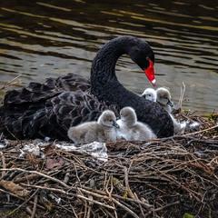 Материнская ласка и любовь