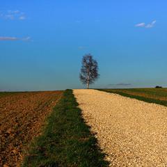 Дорога к березке.