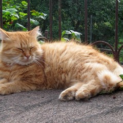 Послеполуденный отдых Кота...