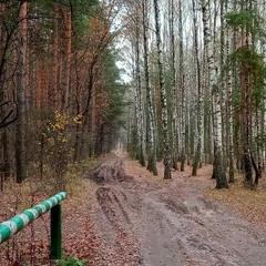 Йдемо до лісу