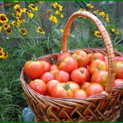 Ех, були помидорчики