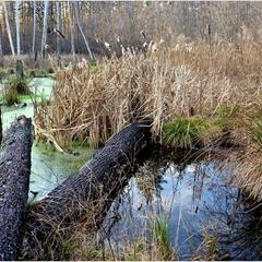 Лісове болото