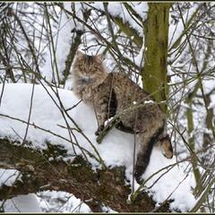 Коти теж люблять сніжок