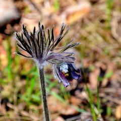 Весняна зачіска )