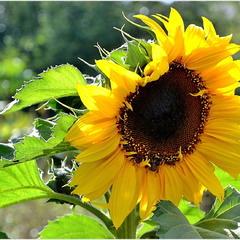 Сонях - сонце