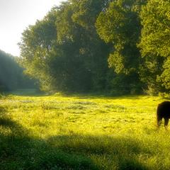 Утро на поляне
