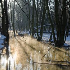 Морозний ранок біля води