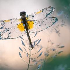 Кришталеві крила