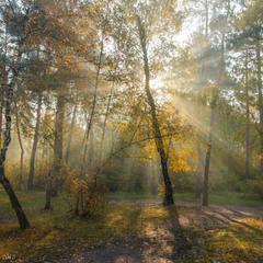Ранок, сонце, жовтень