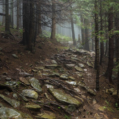 Кам'яна стежка