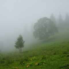 Туман на полонині Смотрич