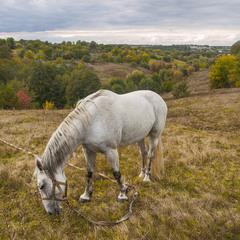 Пейзаж с лошадкой