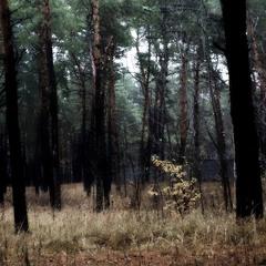 В  черном-черном  лесу