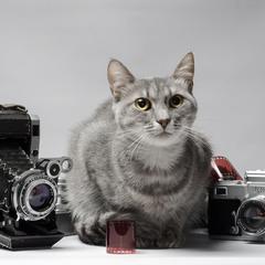 Фотокошка