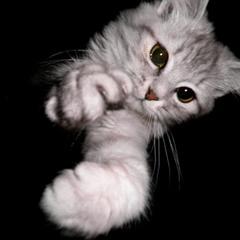 Кіт Марко