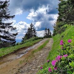 Дорога, которая уходит в горы