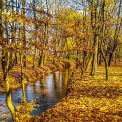 """Золота осінь в гідропарку """"Топільче"""""""