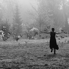 Bird dance