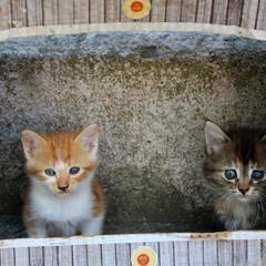 Odessa Region Street Cats