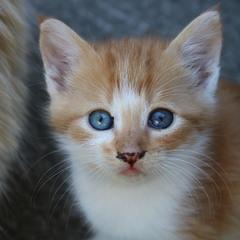 Бездомные коты Одессы. Cat portrait 5