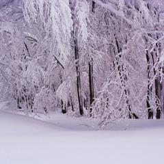 Зимовий спогад