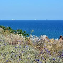 Синява морська і земна