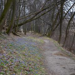 Весна в лісі