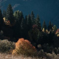 Осінь в карпатських горах