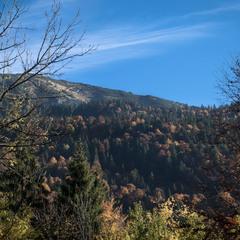 Кольорова осінь Карпат