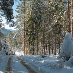 В зимовому лісі...
