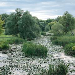 річка Ірпінь