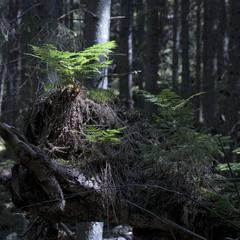 В лісі...