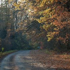 Осінь на лісовій дорозі...