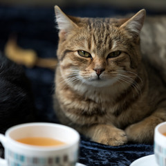 Чаю царю!