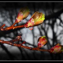 Весна - природы пробуждение