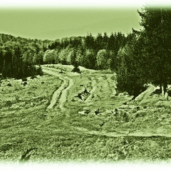Карапты....Скоро без лесов...