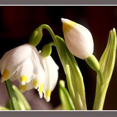 Вітаю з чудовим весняним святом – 8 Березня
