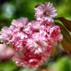 Вірю, що в мандрах ти бачиш правдиві квіти, -- але приходь і до мене!