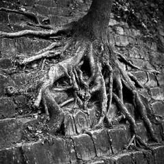 "Tree #8 ""Strong roots"""
