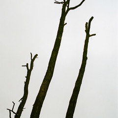 """""""Abstract trees"""""""