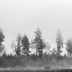 Hiding in the fog-2