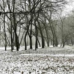 """Winter trees """