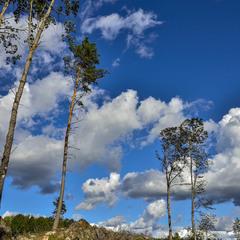 Scandinavian clouds