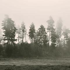 """Hiding in the fog"""