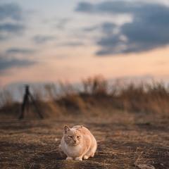 Осенний кот провожает солнце